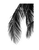 Palms 5 Print by Jamie Kingham