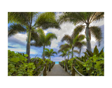 Paradise Path Prints by Dennis Frates