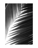 Palms 6 Kunst von Jamie Kingham