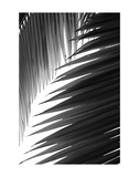 Palms 6 Prints by Jamie Kingham
