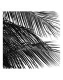 Palms 4 (detail) Art by Jamie Kingham