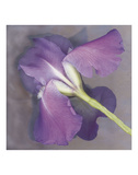 Parfum Prints by Erin Clark