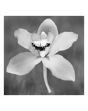 Orchid (b/w) Poster by Erin Clark
