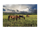 Pammie's Pasture Prints by Barry Hart