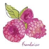 Framboises Giclee Print by Sandra Jacobs