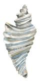 Coastal Seashells - Drill Prints by Sandra Jacobs