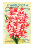 Conard & Jones 1898 Pink Canna Print