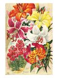 Fine Hardy Lilies Prints