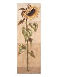 Le Soleil de La Bella italia III Plakater af Karsten Kirchner