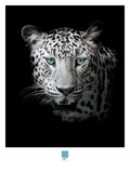 Leopard Photograph Giclee Print by Armand Brito