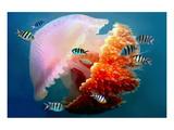 Giant Jellyfish Underwater Poster