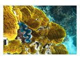 Queensland Ocean Corals Prints