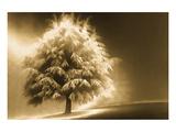 Schwartz - Enlightened Tree Posters by Don Schwartz