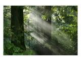 Schwartz - Light through the Trees Print by Don Schwartz
