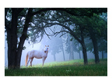 Mare in a Mystical Foggy Woods Prints
