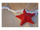 Red Starfish on Thebeach Poster
