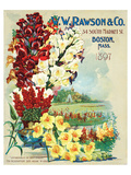 Rawson Seed Company Boston Prints