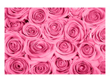 Pink Rose Bouqet Prints