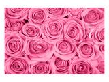 Pink Rose Bouqet Prints