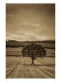 Schwartz - Lone Tree at Sunset Print by Don Schwartz