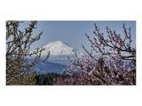 Schwartz - Mt. Adams in Spring Posters by Don Schwartz