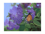 Lilacs Robin Prints by Julie Peterson