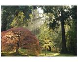 Schwartz - Bathed in Morning Light Premium Giclee Print by Don Schwartz