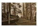 Schwartz - Down the Misty Path Prints by Don Schwartz