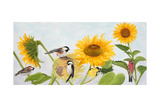 Sunflowers and Birds Poster by Julie Peterson