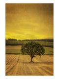 Schwartz - Lone Tree at Sunset Art by Don Schwartz