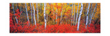 Changing Seasons Prints by Gary Crandall