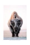 Ghost of the Plains Plakaty autor Gary Crandall