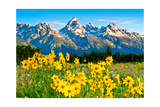 Teton Sunshine Poster by Gary Crandall