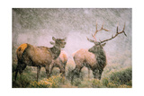 Elk in Storm Art by Gary Crandall