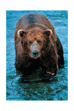 Lord Grizz Prints by Gary Crandall