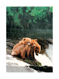 Rain Bears Prints by Gary Crandall