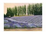 Greysmarsh Lavender Art by Julie Peterson
