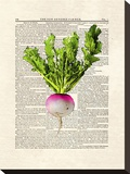 Turnip Stretched Canvas Print by Matt Dinniman