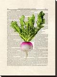 Turnip Stretched Canvas Print by Matt Dinniman