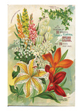 Summer Flowering Bulbs &Lilies Posters