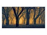 Schwartz - Woods Aglow Prints by Don Schwartz