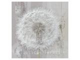 Silver Parachute Posters af Gerard Beauvoir