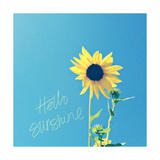 Hello Sunshine Prints by Lisa Hill Saghini