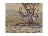 Oryx Prints by Peter Blackwell