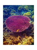Barrier Reef Coral II Poster by Kathy Mansfield
