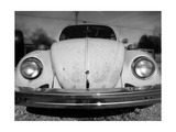 Vintage Bug Prints by Robert Jones