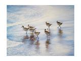 Sand Dancers Prints by Bruce Nawrocke