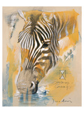 Wildlife Zebra Prints by  Joadoor