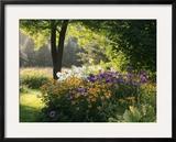 Summer Flower Adourn a Farm Garden Framed Photographic Print by Kenneth Ginn