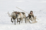 Nenets Boy Driving A Reindeer Photographic Print by Bryan and Cherry Alexander
